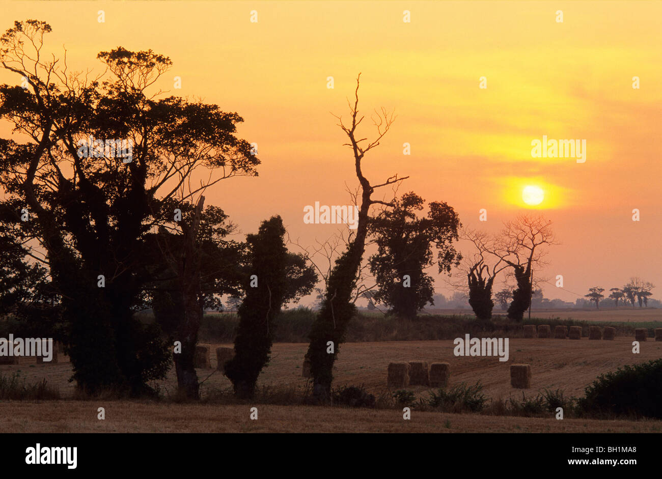 Europe, England, Norfork, sunset near North Lopham - Stock Image