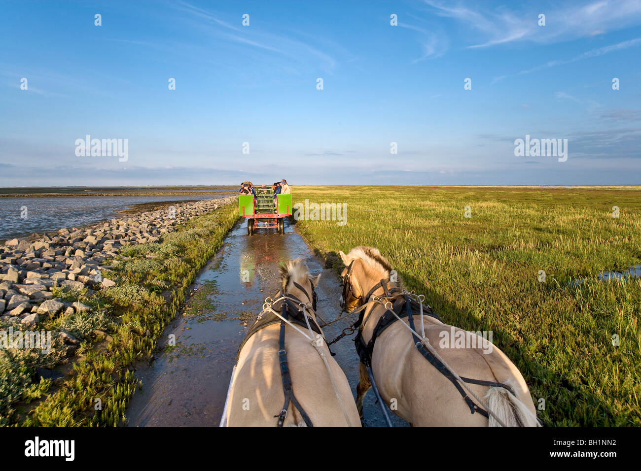 Horse Carriage Tour to Hallig Suedfall, North Frisian Islands, Schleswig-Holstein, Germany - Stock Image