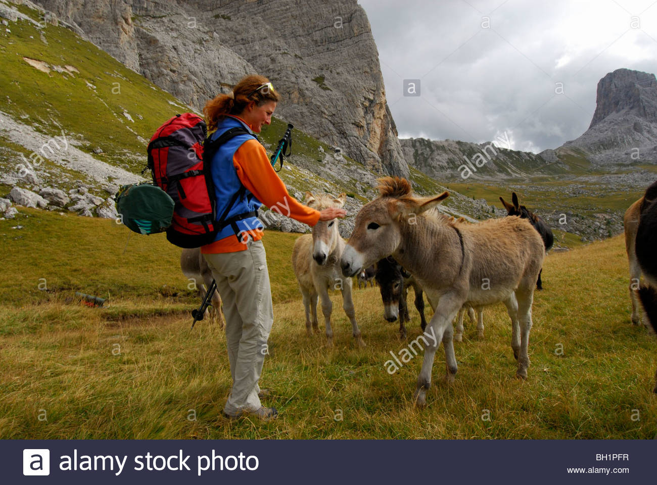 young woman with herd of donkeys, Forcella Giau, Alta Via delle Dolomiti No. 1, Dolomites, Cortina, Venezia, Italy - Stock Image