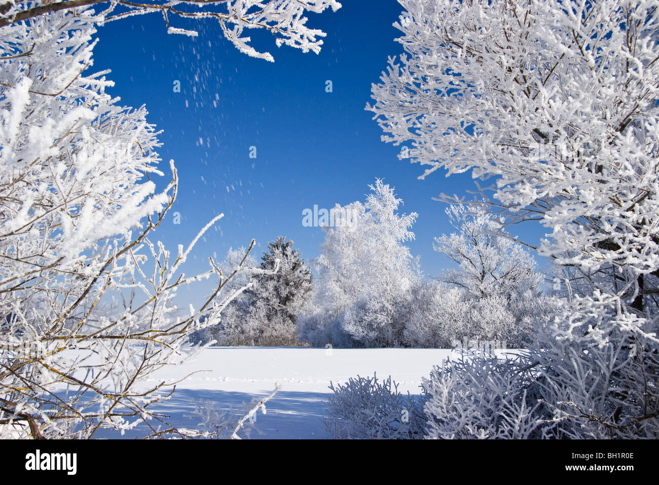Winter scenery with trees and white frost, Upper Bavaria, Germany Stock Photo