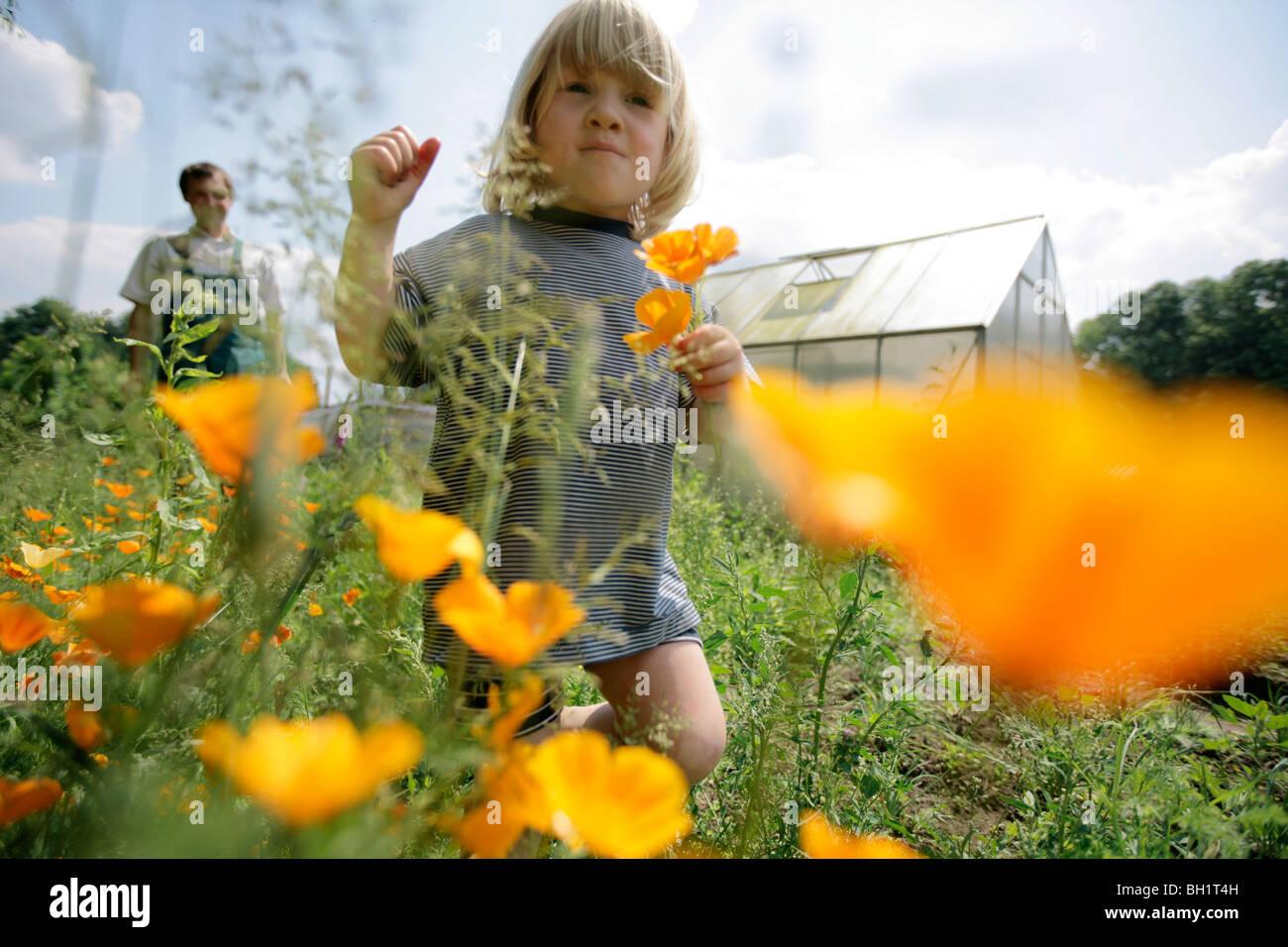 Boy picking California poppy (Eschscholzia californica), biological dynamic (bio-dynamic) farming, Demeter, Lower - Stock Image