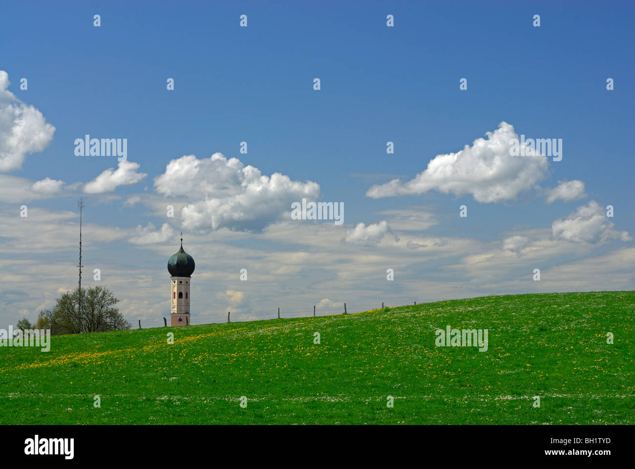 sea of dandelion and spire, onion-shaped dome, Upper Bavaria, Bavaria, Germany - Stock Image
