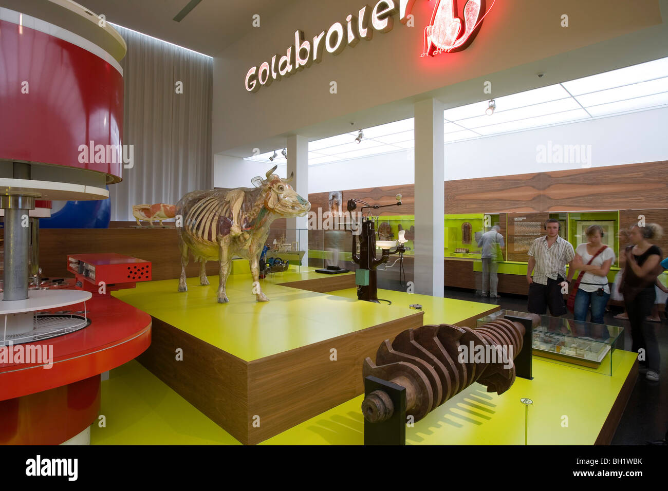 Das Deutsche Hygiene Museum, DHMD, Room 3 Eating and Drinking, Glass cow, Dresden, Saxony, Germany, Europe - Stock Image