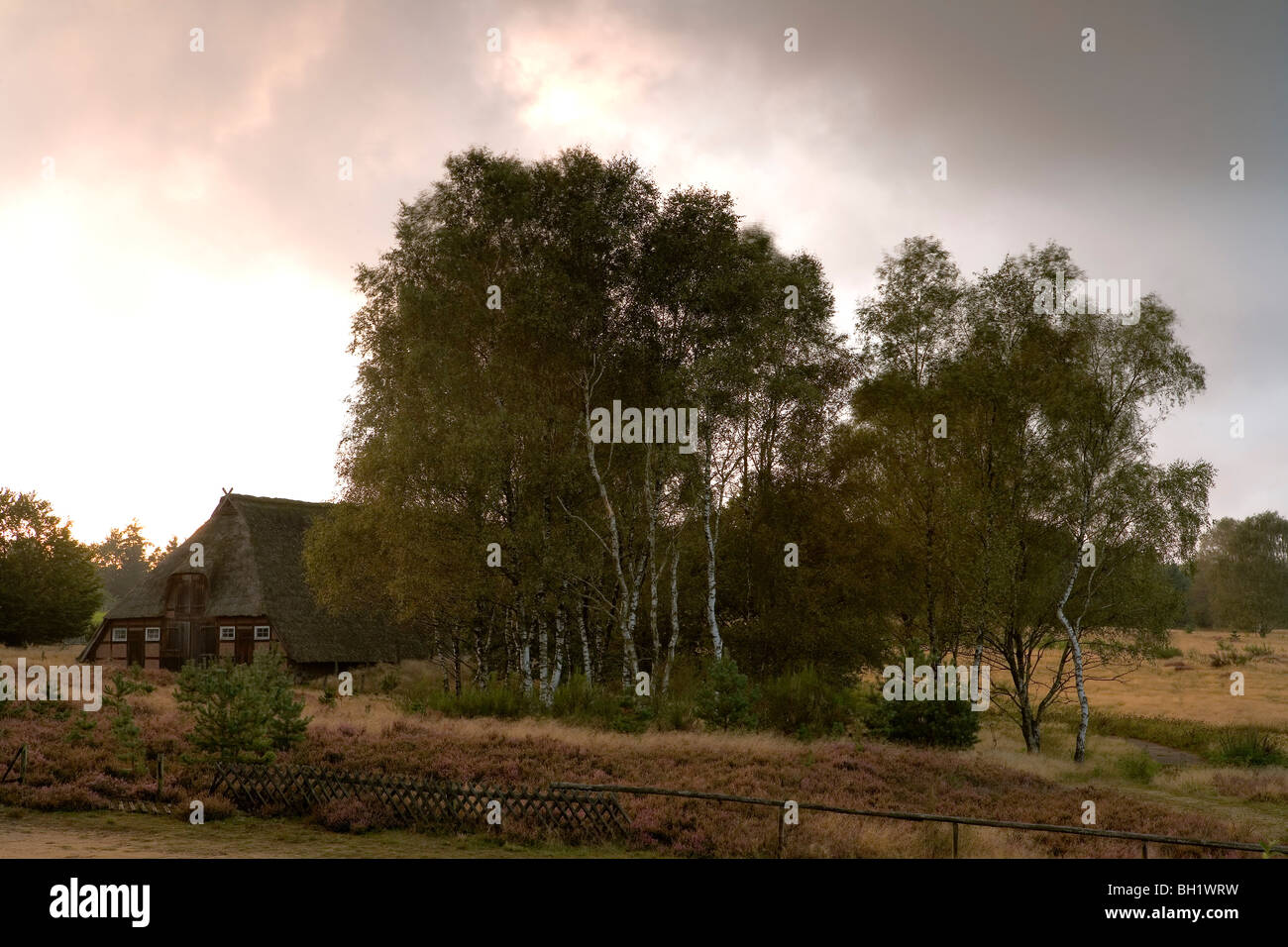 Country house and birch trees in the light of the morning sun, Luneburg Heath, Lower Saxony, Germany, Europe - Stock Image