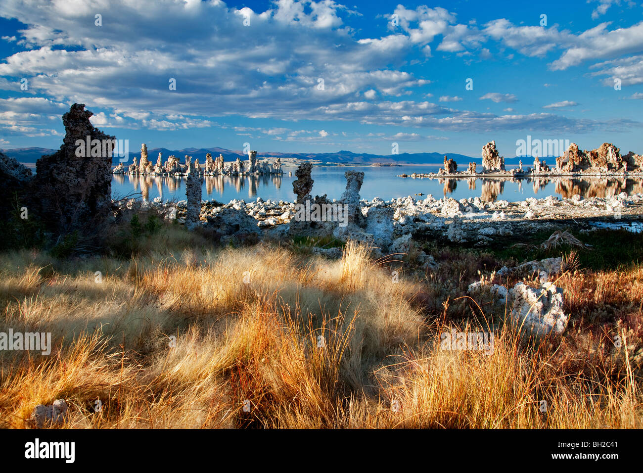 Grasses and tufa at Mono Lake, California - Stock Image