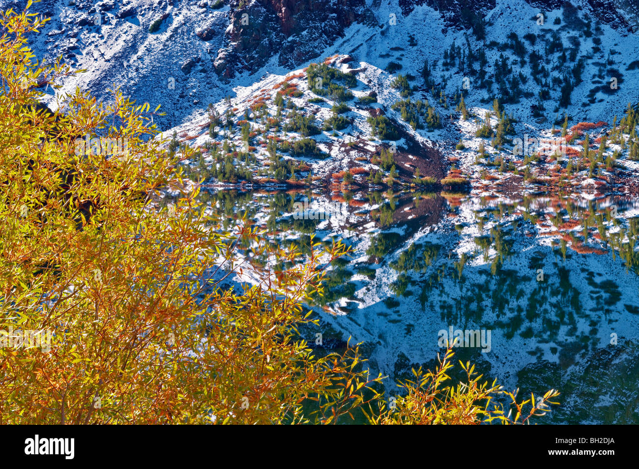 Ellery Lake with fall colored willows and reflection after snowfall. Inyo National Forest, California - Stock Image