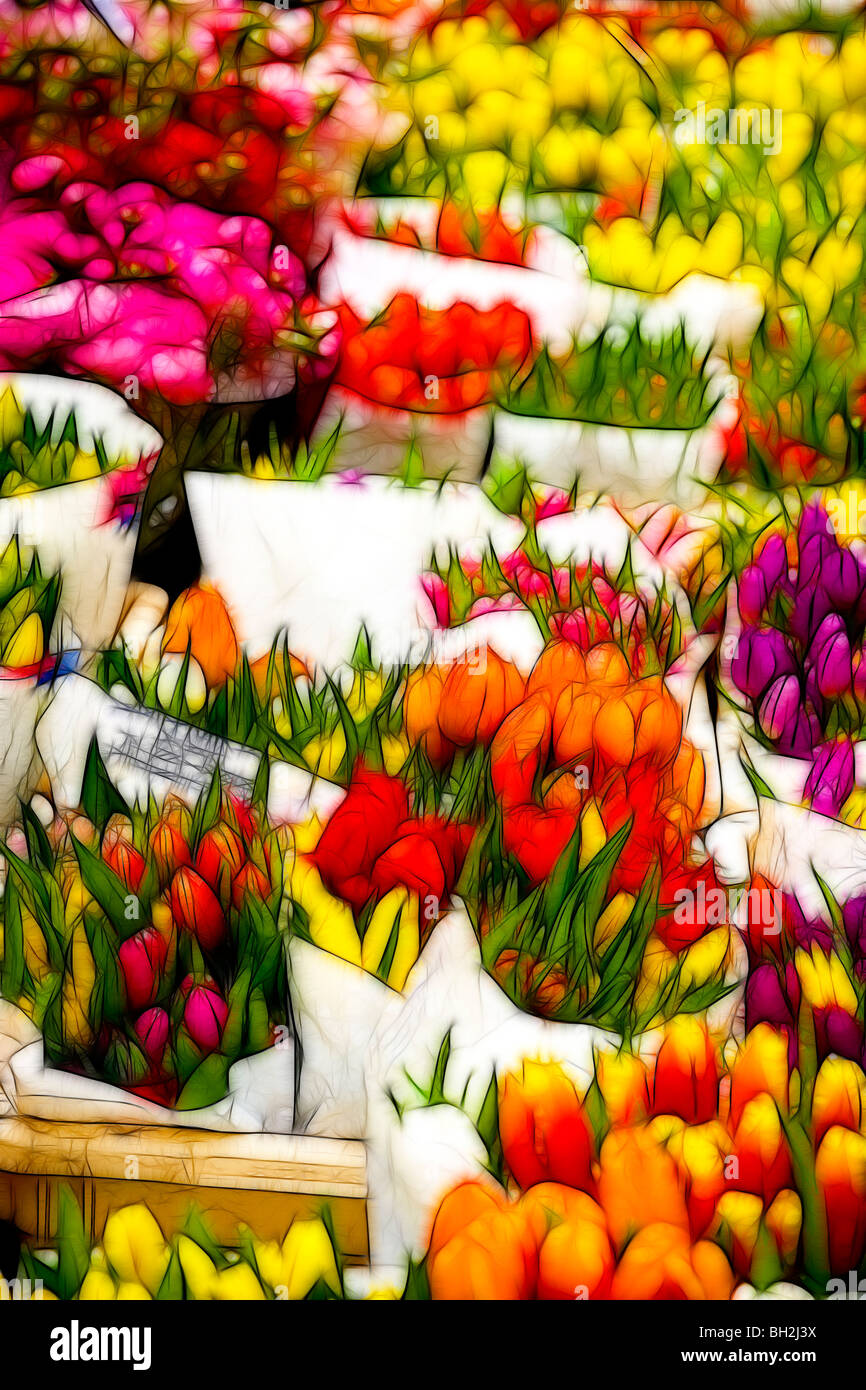 Photo illustration:  Displays of tulips for sale at a market in Spring - Stock Image