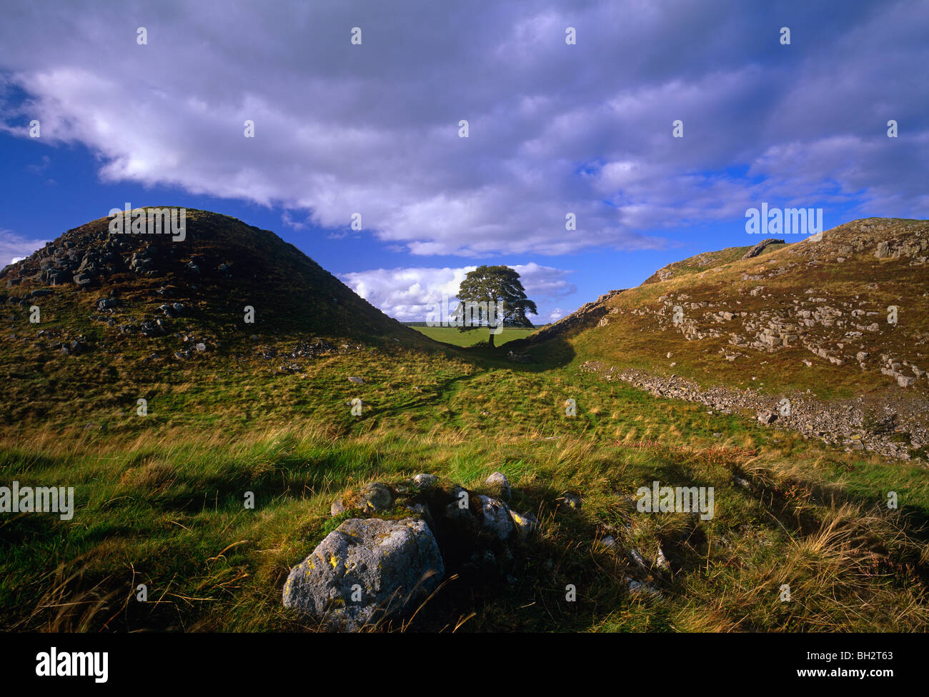 A view of Sycamore Gap near Bardon Mill on Hadrians Wall in Northumberland - Stock Image