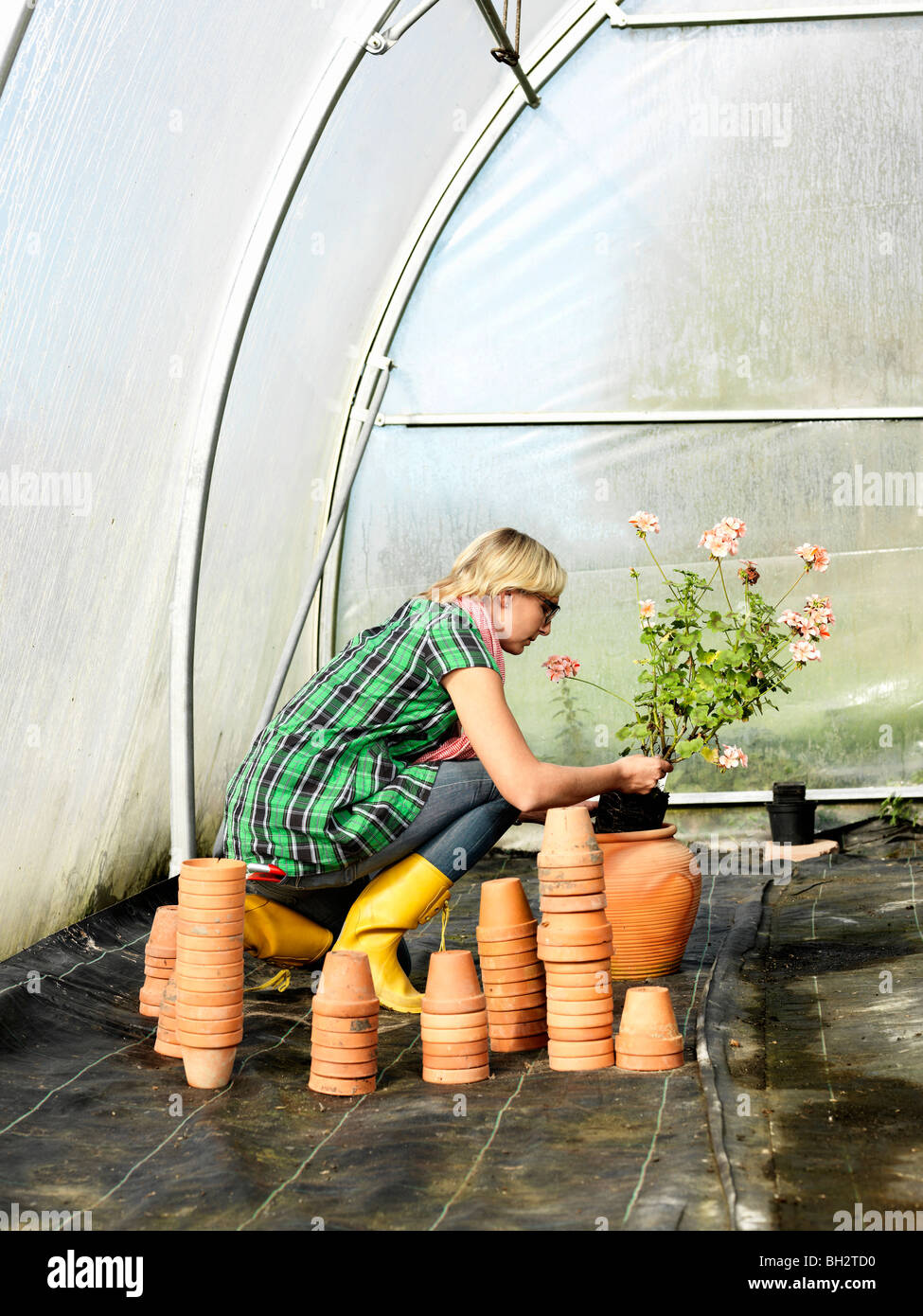 Woman planting flower in green house Stock Photo