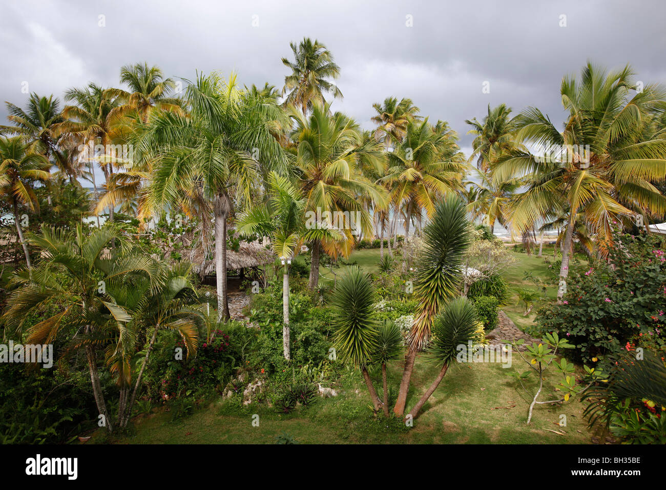 Palm trees, lawn beach, ocean, Las Galeras, Samana peninsula, Dominican Republic - Stock Image