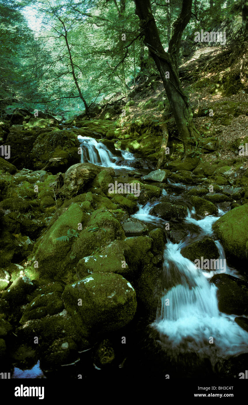 The River Yealm running through Dendles Wood National Nature Reserve Devon - Stock Image