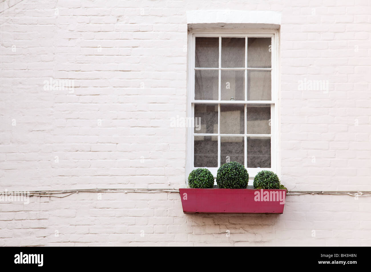 Simple red window box with box hedge topiary beneath double hung sash windows and white wall. Arundel West Sussex - Stock Image