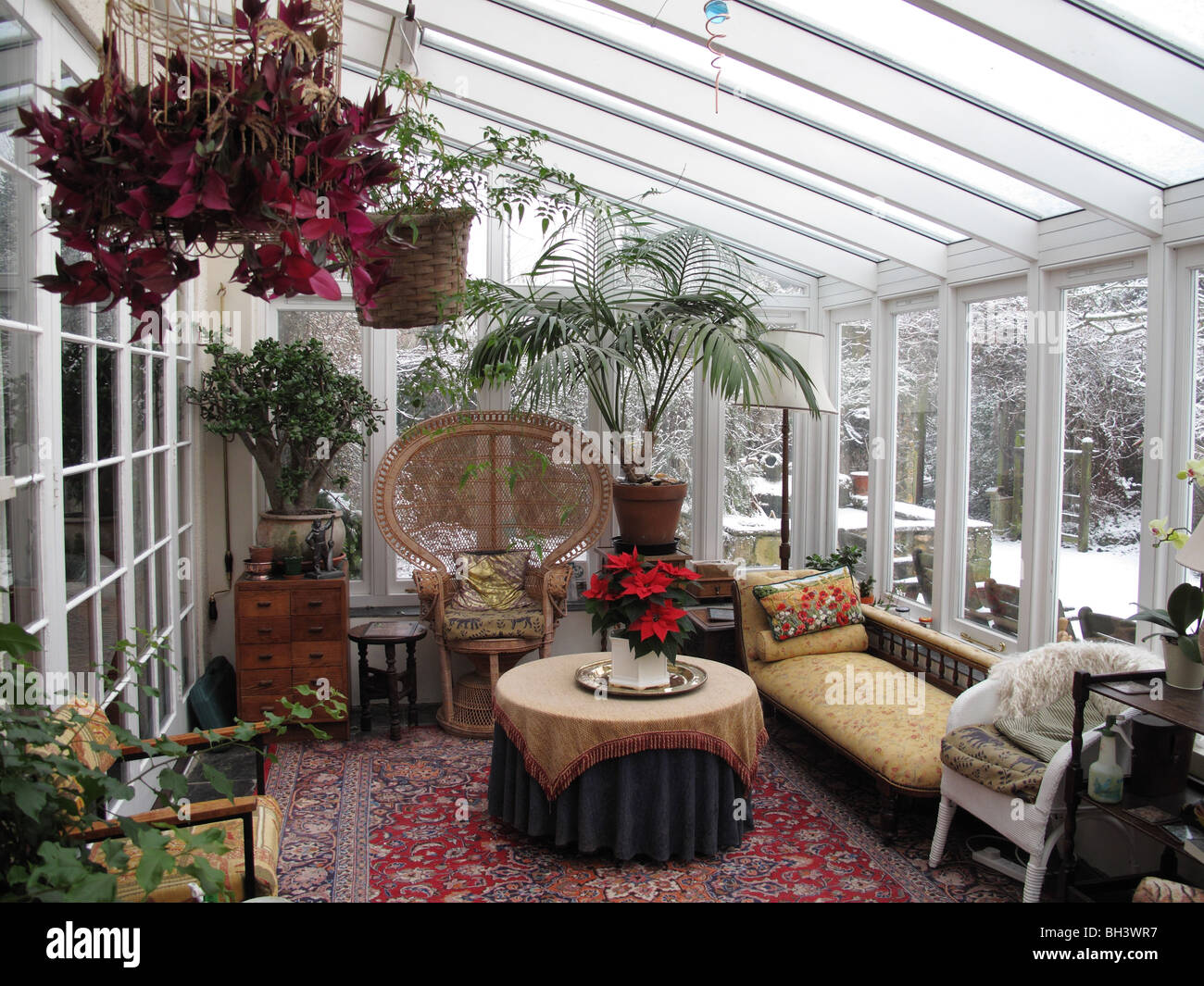 White painted hardwood conservatory with plants and furniture in mid winter with snow outside - Stock Image