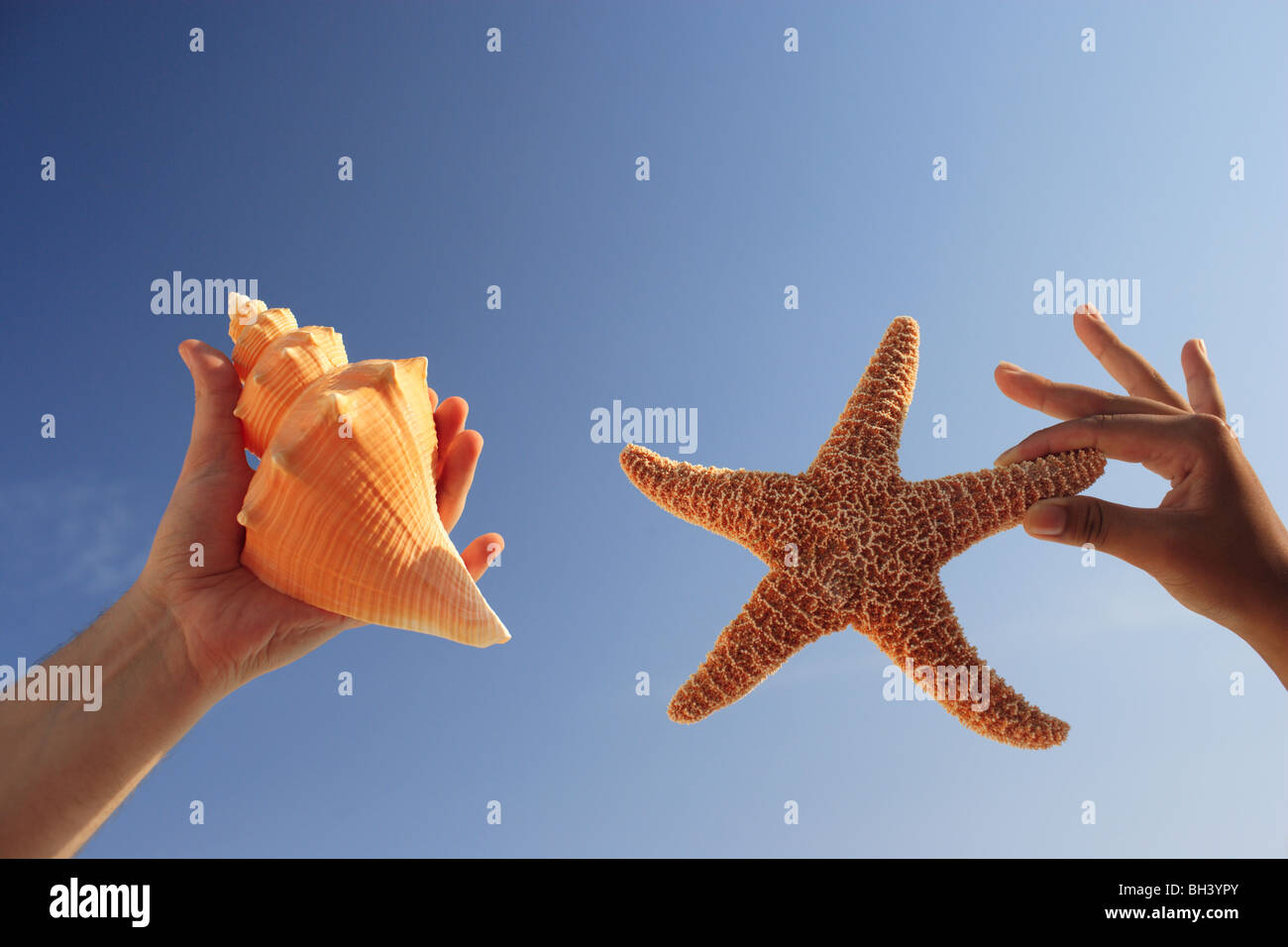 A man and a woman's hand holding a starfish and a seashell against a blue cloudless summer sky - Stock Image