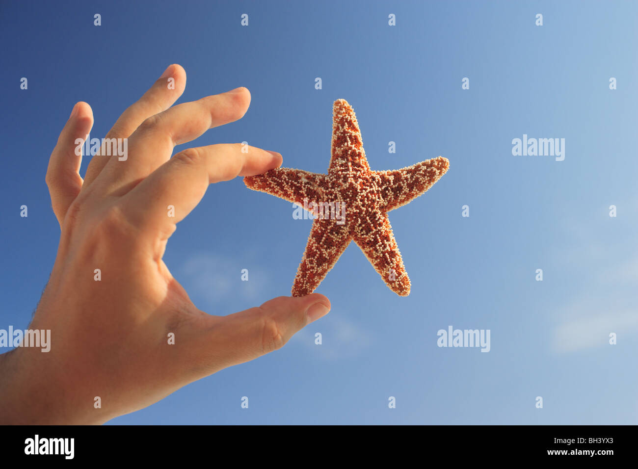Close up of a man's hand holding a small starfish in the air against a blue sky - Stock Image
