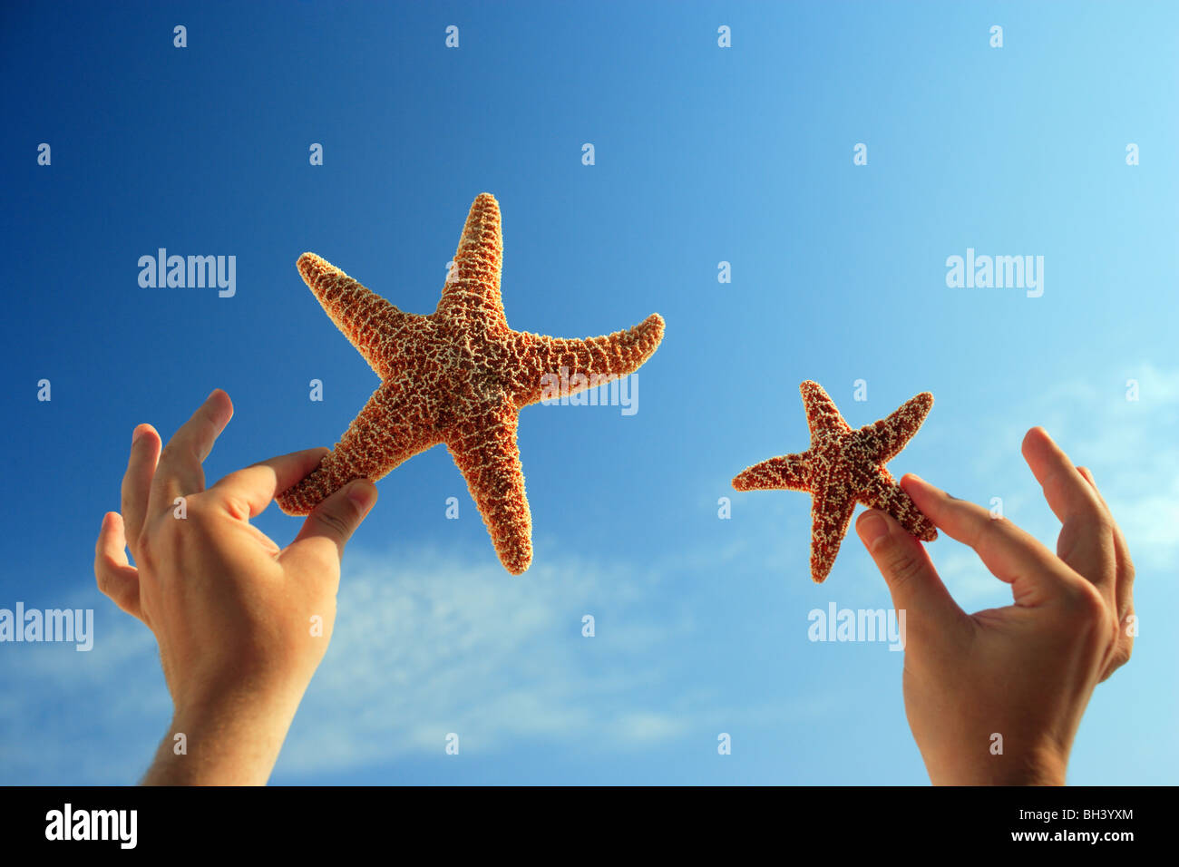 A man's hands holding one small and one large starfish in the air against a blue summer sky - Stock Image