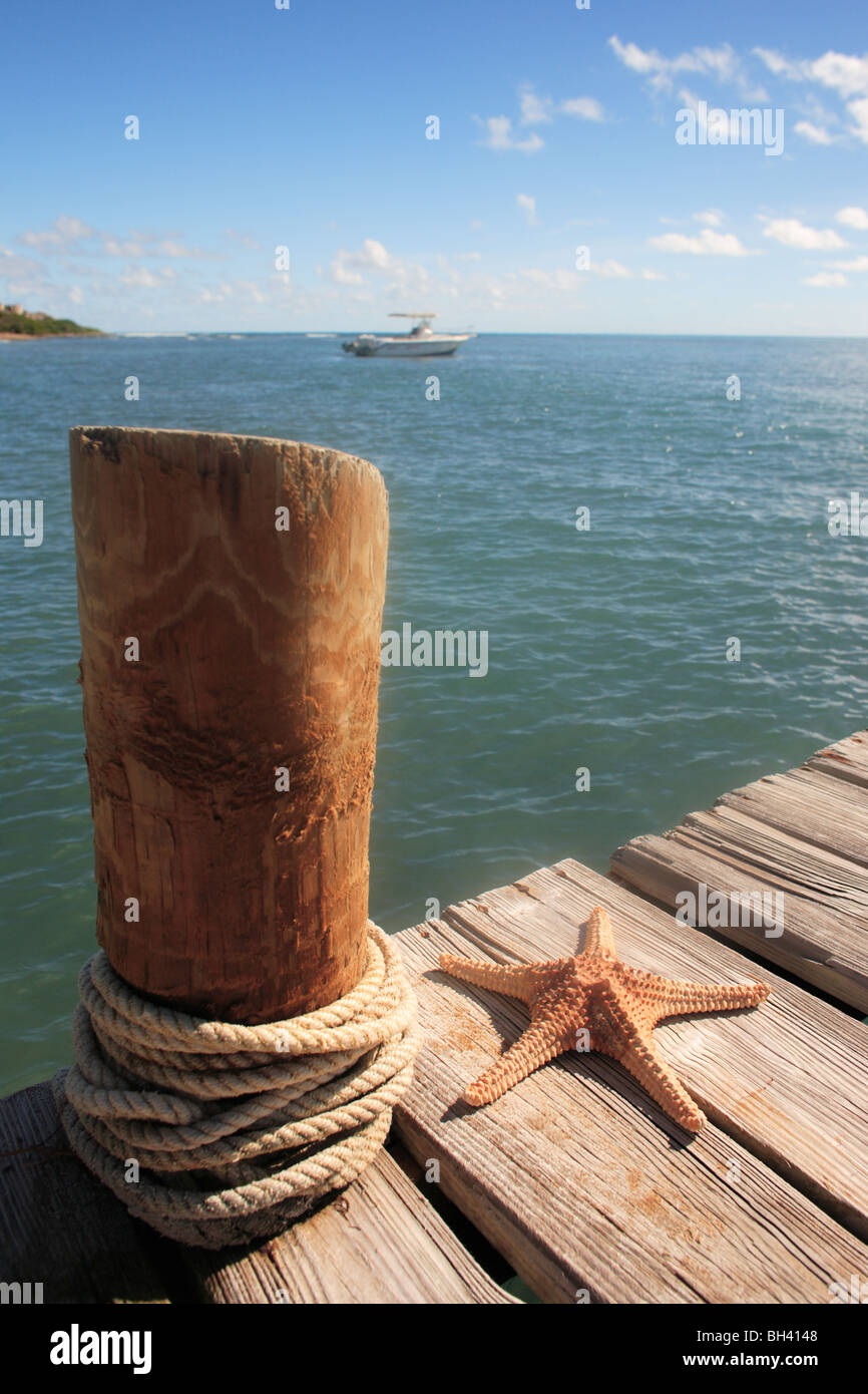 A starfish on a wooden jetty against the sea and sky - Stock Image