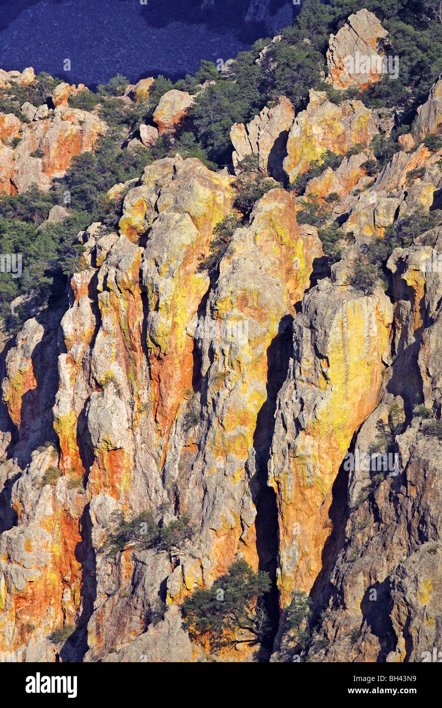 Lichen covered Rhyolite cliffs in the Chiricahua Mountains - Stock Image