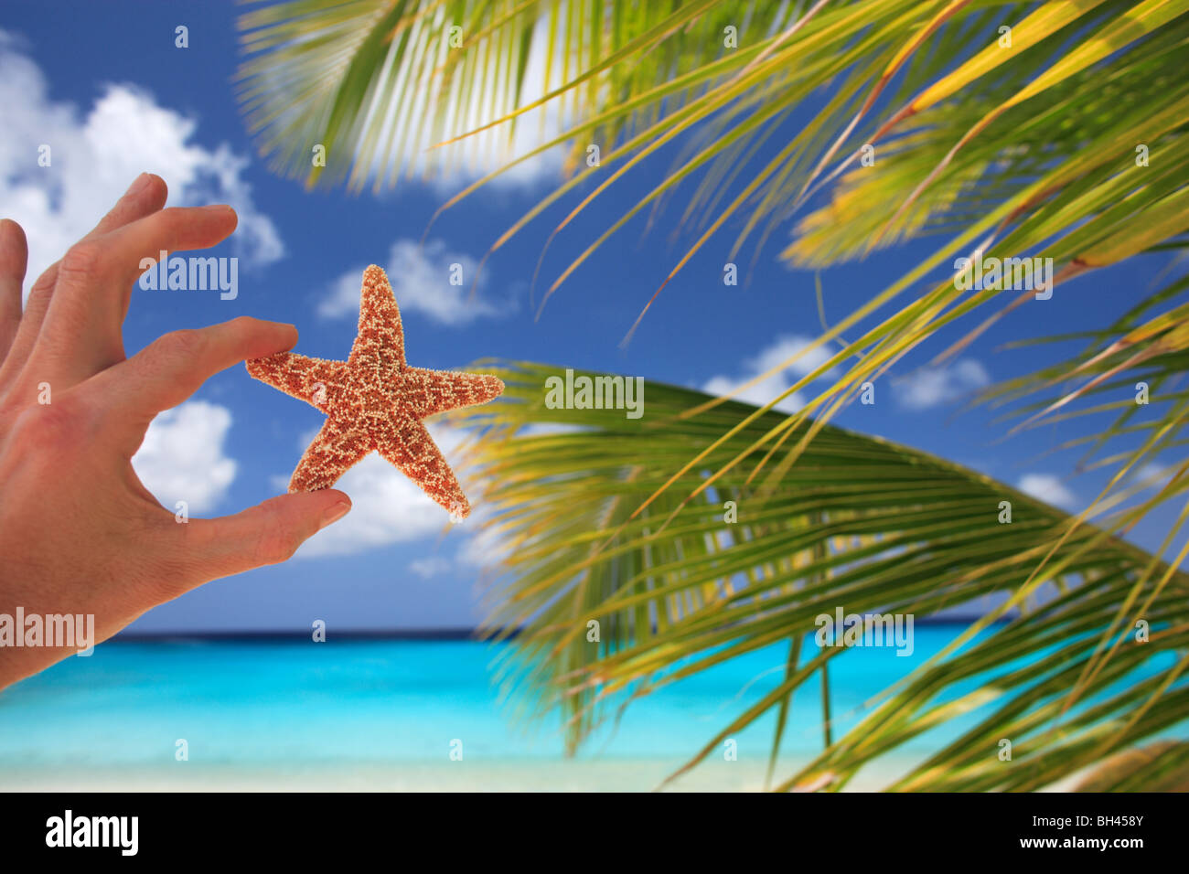 A man's hand holding a small starfish in the air against palm trees on a deserted tropical beach - Stock Image