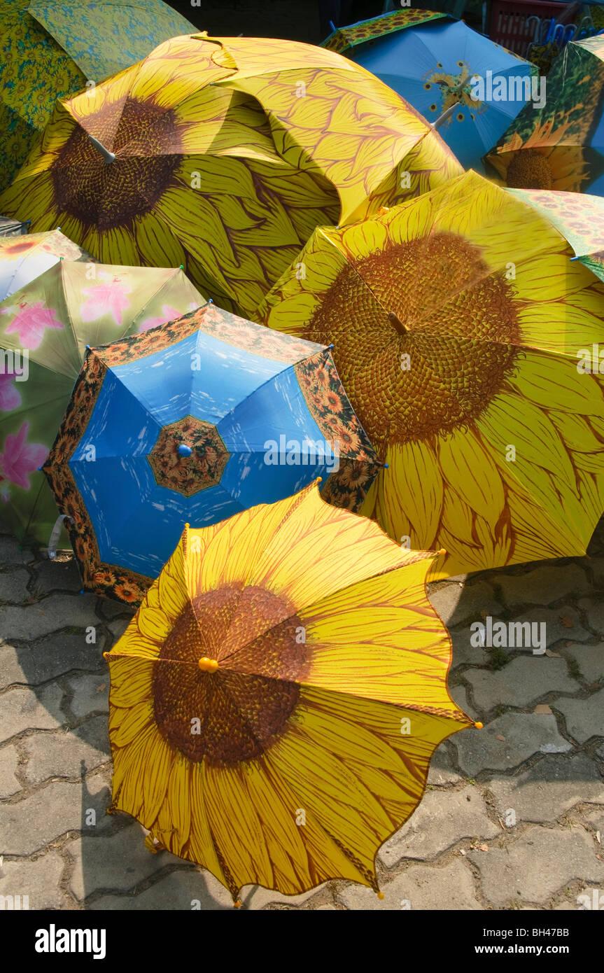 sunflower umbrellas near Saraburi Thailand - Stock Image