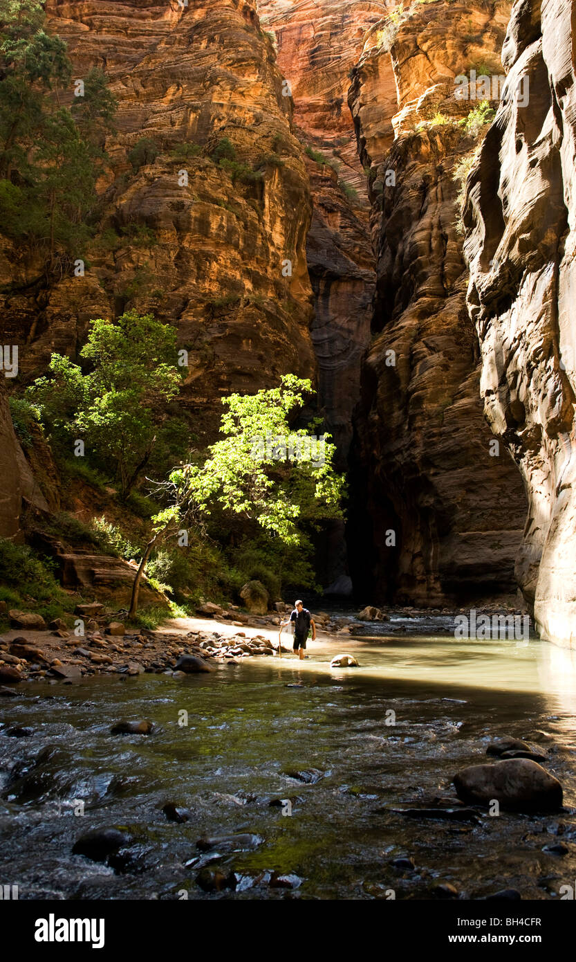 A young man walks down a river with a walking stick in Zion National Park, Utah. - Stock Image