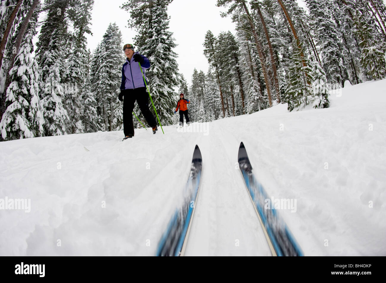 Low angle view of cross country ski tips and two young women nordic skiing on a cross country trail in the snow - Stock Image