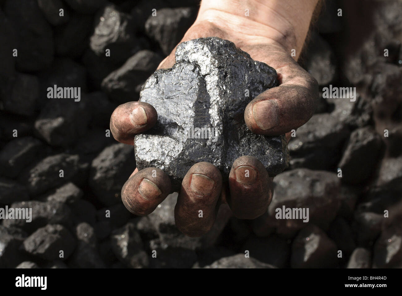 Dirty hand holding shiney anthracite coal. - Stock Image