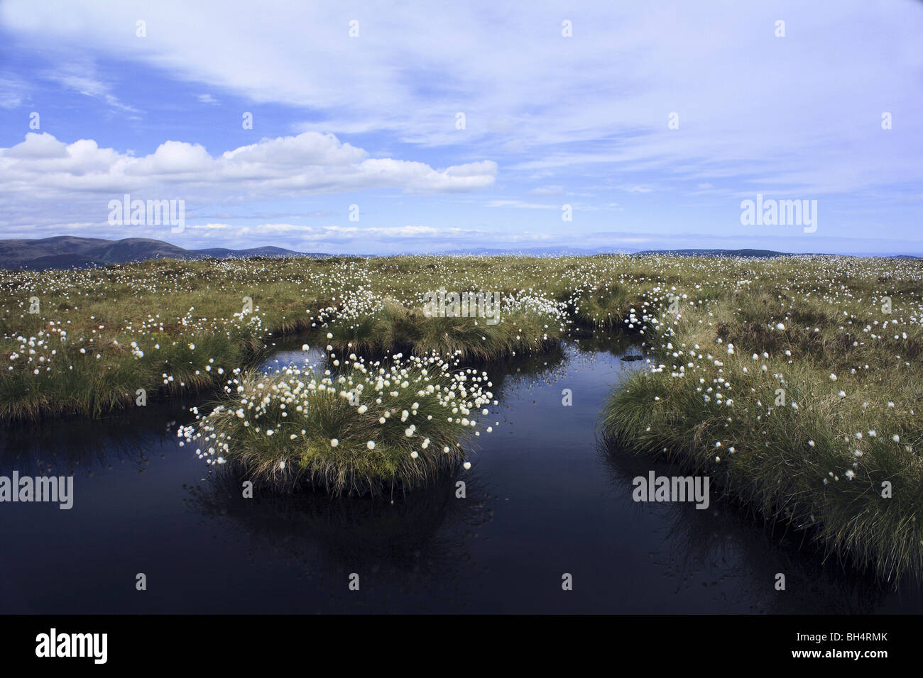 Cotton grass and peat bog near Golspie in summer. Stock Photo