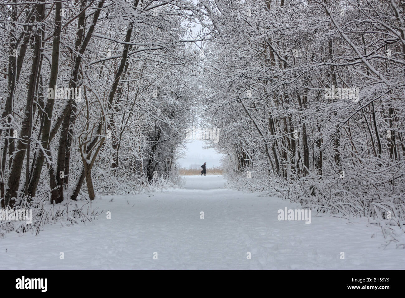 Snow forrest winter scenery - Stock Image