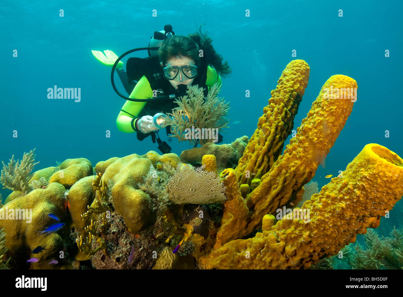 Diver exploring reef in Belize - Stock Image