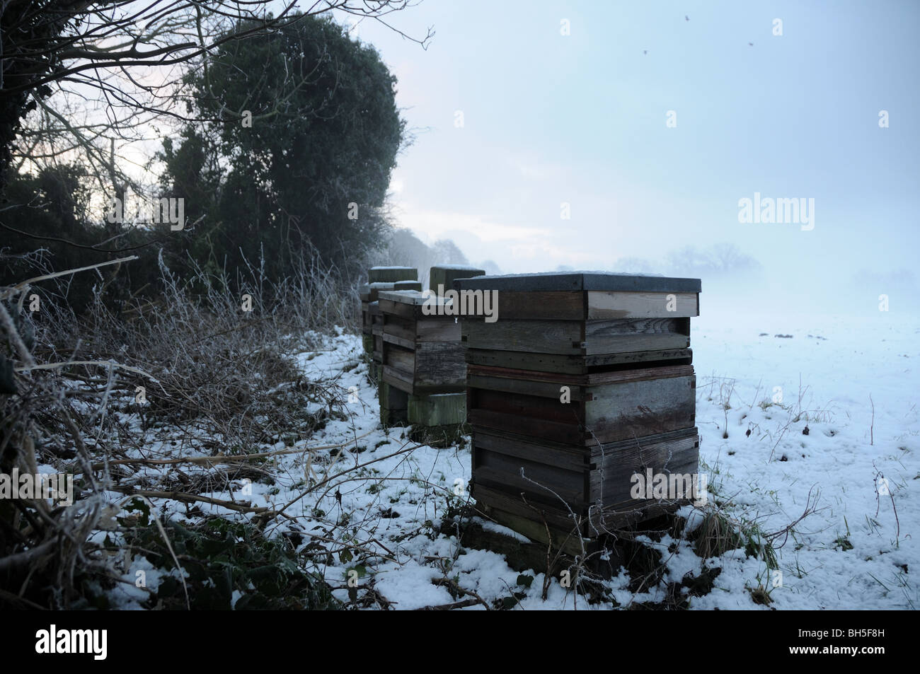 Beehives in snow - Stock Image