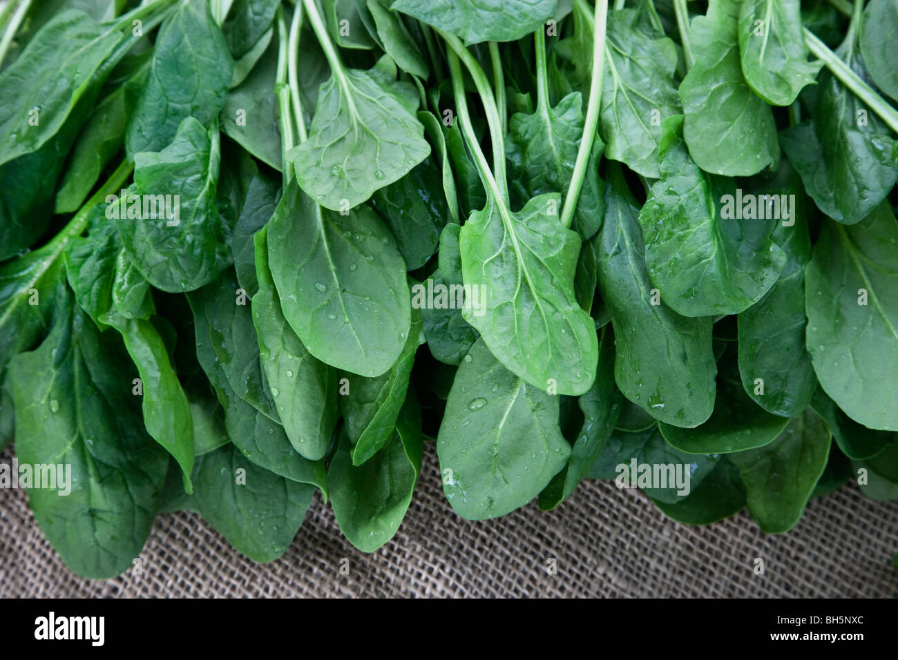 Harvested 'Baby Spinach' (Spinacia oleracea) Stock Photo