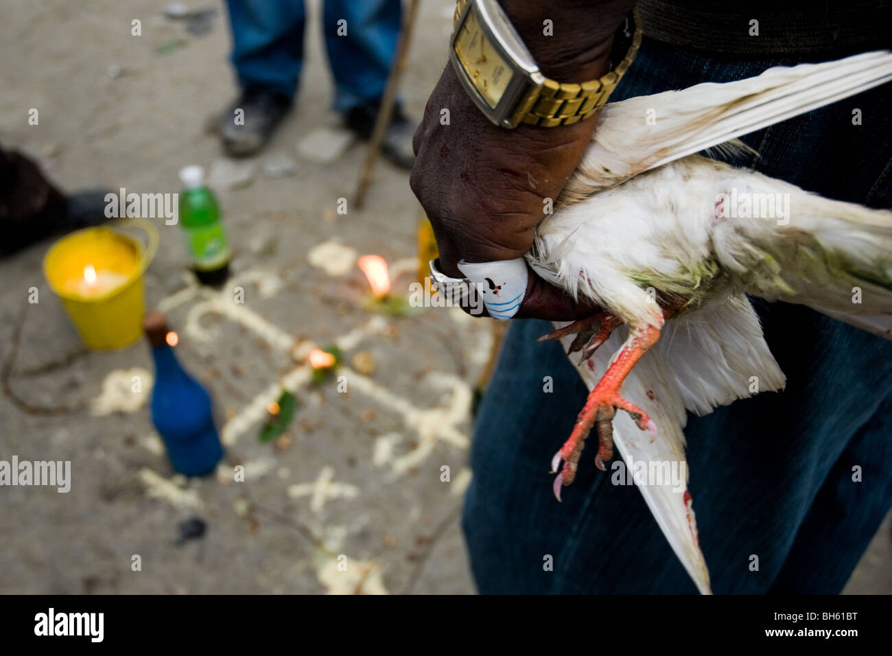 A Haitian man holding a white pigeon destined as an animal sacrifice during the Vodou ceremony in Saut d'Eau, - Stock Image