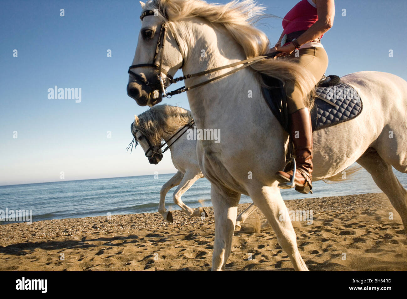Two women riding horses on beach - Stock Image