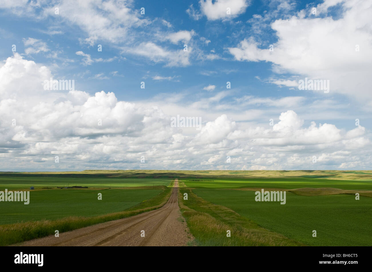 Rosewood Road and green fields and dramatic sky NW of Opheim - Stock Image