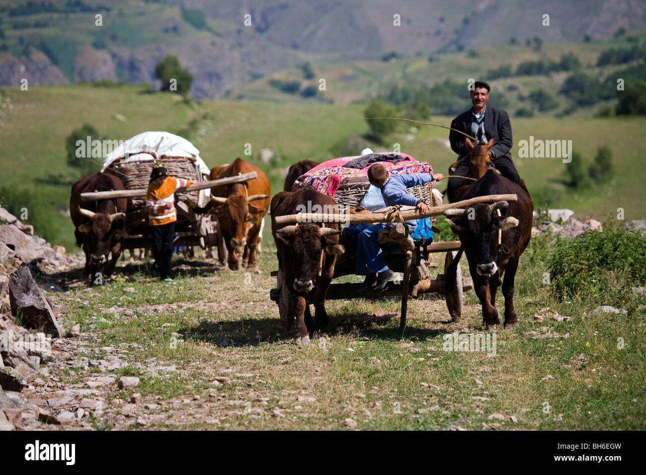 Traveling with ox carts to highlands, Posof Ardahan Turkey. - Stock Image