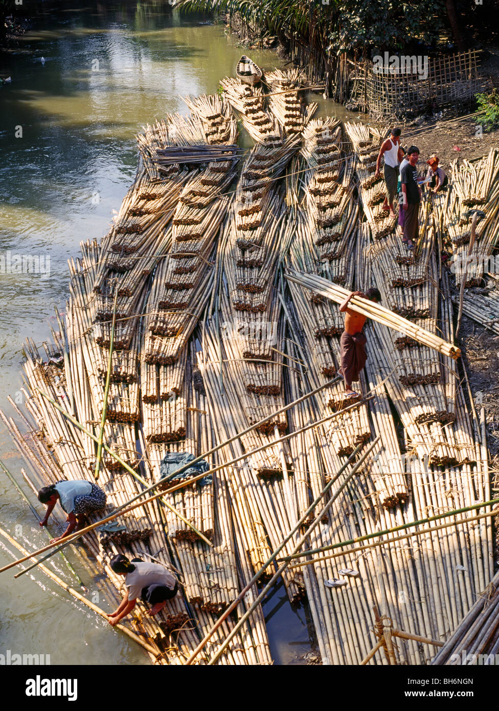 Building a bamboo raft on a river Bambusfloss wird auf Flusseitenarm hergestellt Myanmar Burma - Stock Image