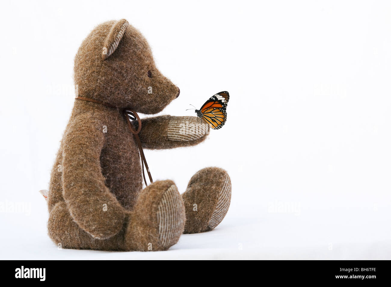 Teddy bear holding a Striped Tiger butterfly against a white background - Stock Image