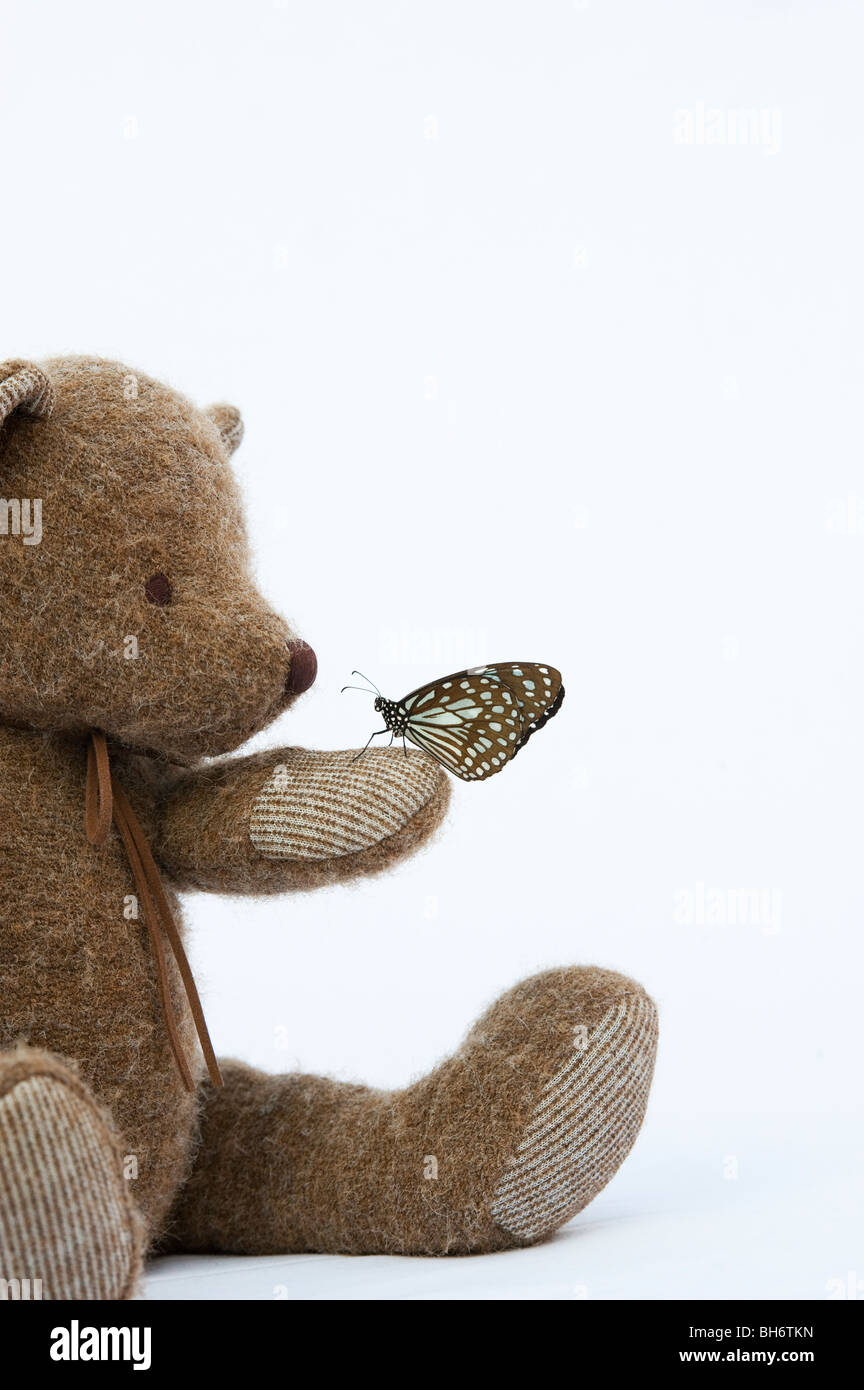 Teddy bear holding a Blue Tiger butterfly against a white background Stock Photo
