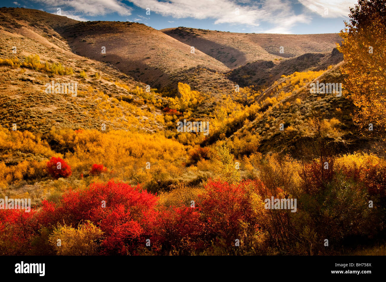 Idaho, Mountain autumn colors, South Fork of the Boise River. - Stock Image