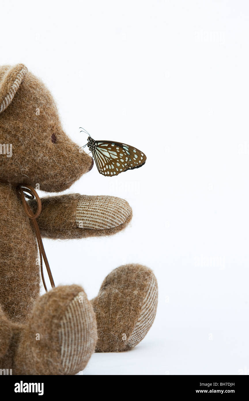 Teddy bear with a Blue Tiger butterfly on his nose against a white background Stock Photo