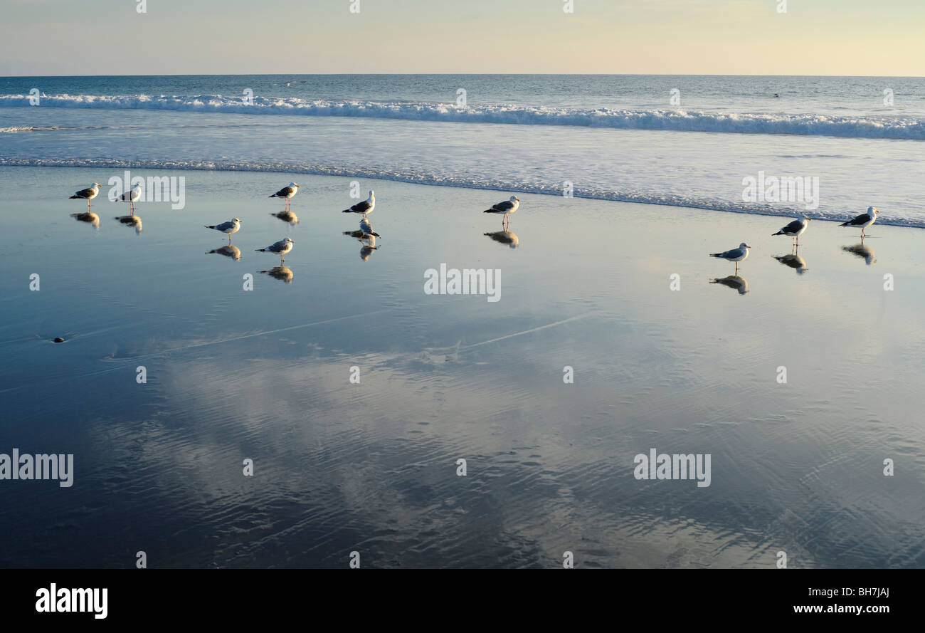 Seagulls standing on a beach with their reflections in the water. - Stock Image
