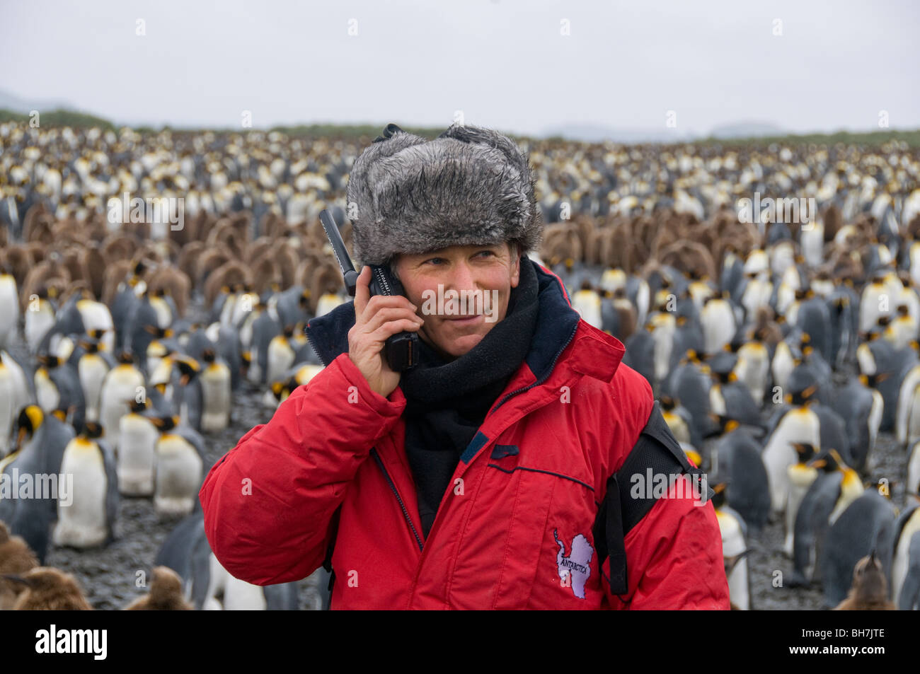Man using satellite phone in Antarctica with a large colony of king penguins in the background Stock Photo