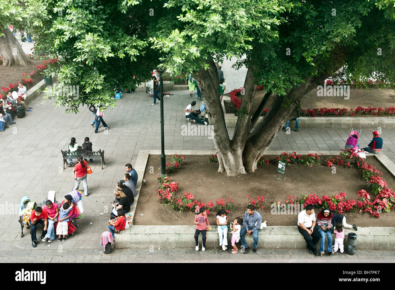 families friends & strangers gather at the base of centuries old trees to enjoy Sunday sociability in the Oaxaca Stock Photo