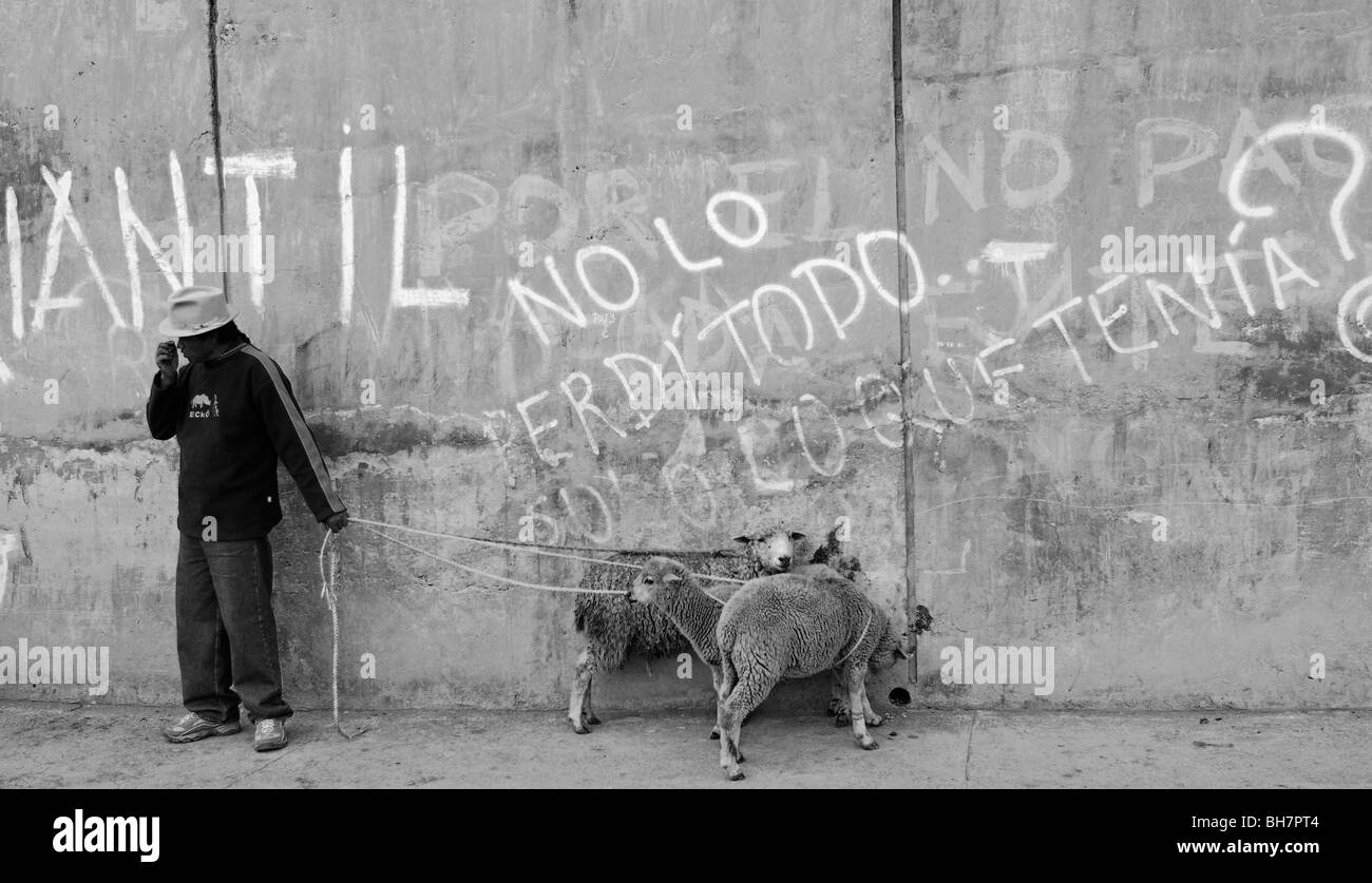 Ecuador, Otavalo, view of a local man standing against wall with white graffitis holding two white sheeps tied up - Stock Image