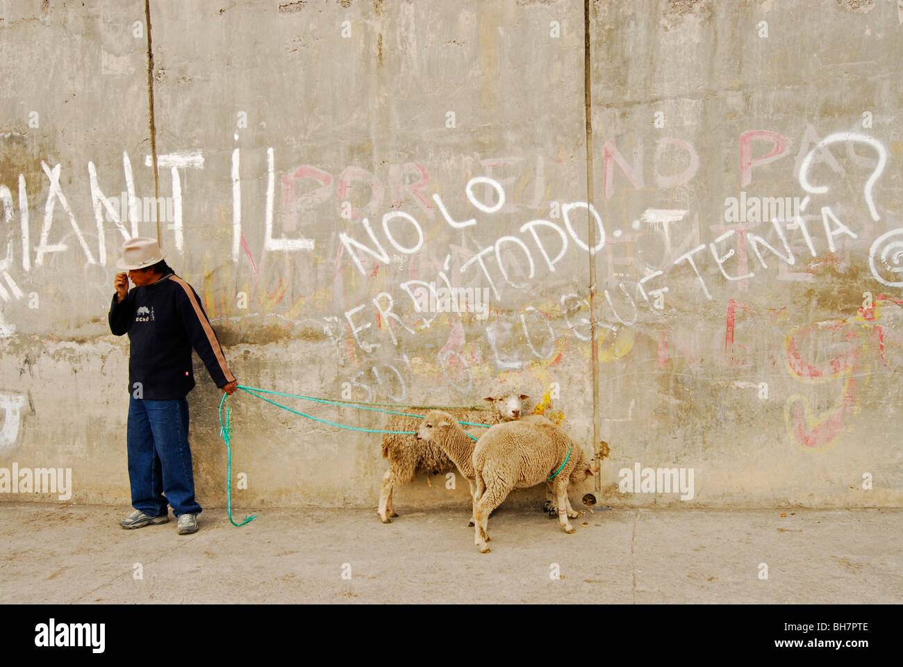 Ecuador, Otavalo, view of a local man standing against wall with white graffitis holding two white sheeps tied up Stock Photo