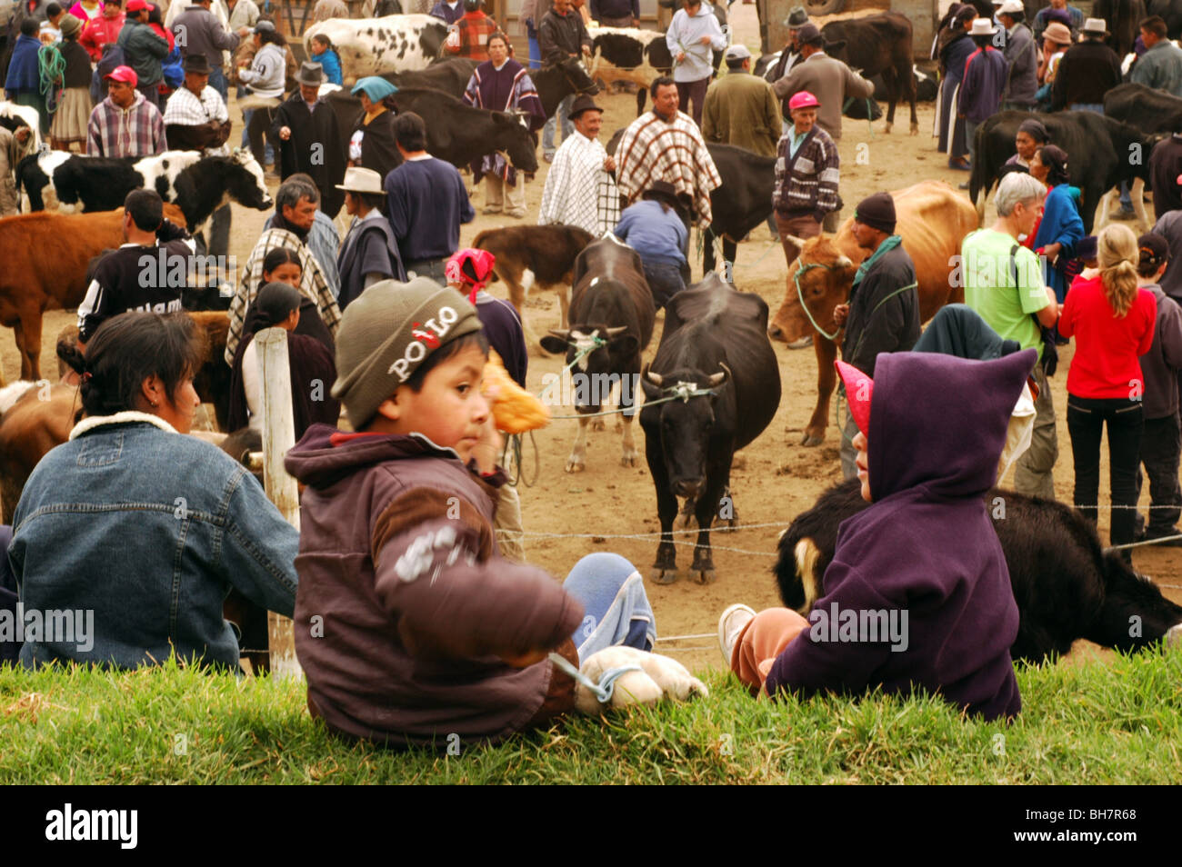 Ecuador, Otavalo, rear view of two boys sitting on a grassy area, overlooking at at the cows section of a cattle - Stock Image
