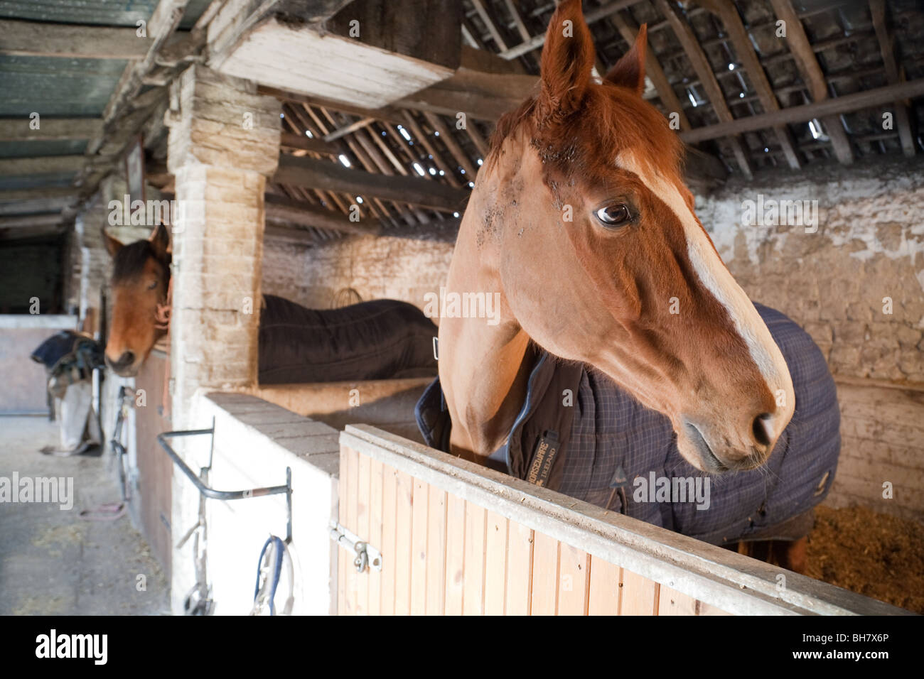 Horses in their stable, Suffolk, UK - Stock Image