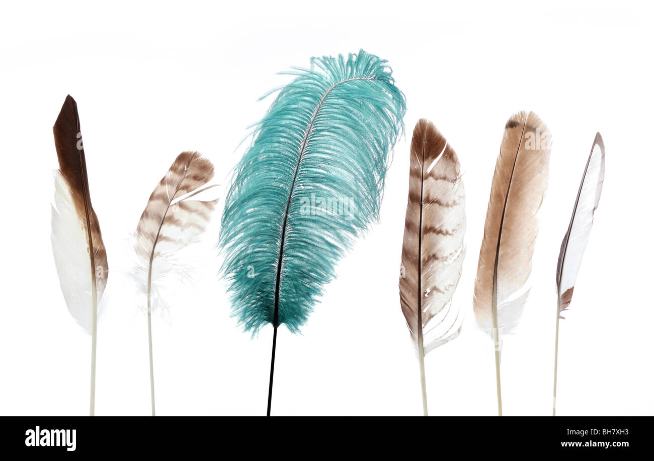 five brown feathers and one large green feather standing in a row symbolizing uniqueness - Stock Image
