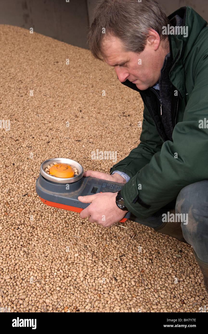 Farmer using equipment to test Beans for moisture - Stock Image